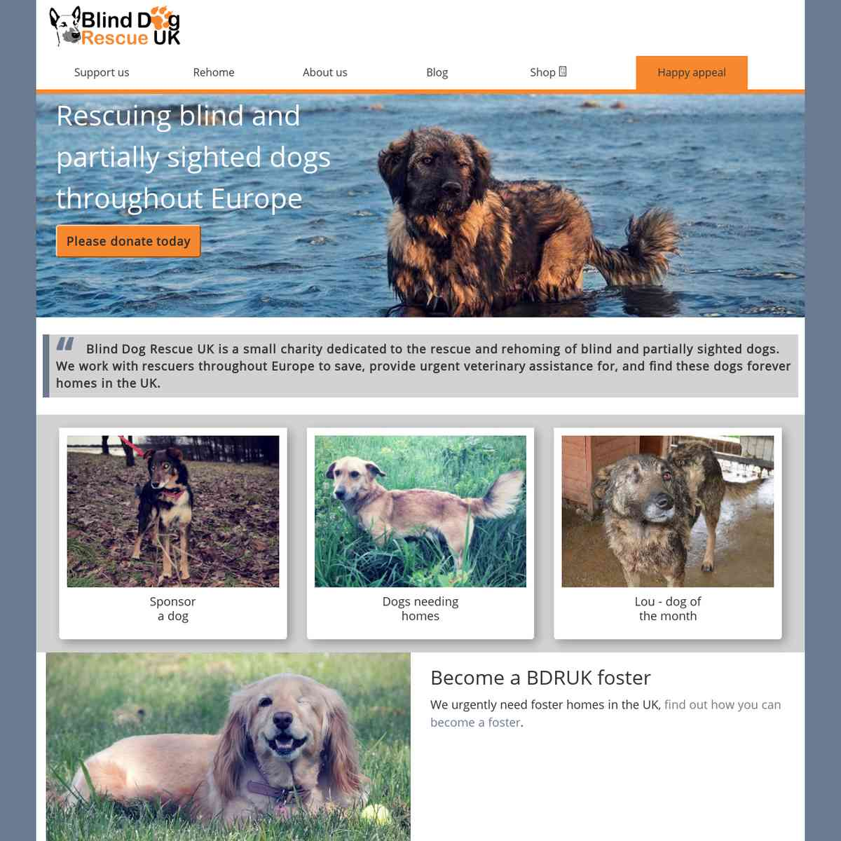 Blind Dog Rescue UK
