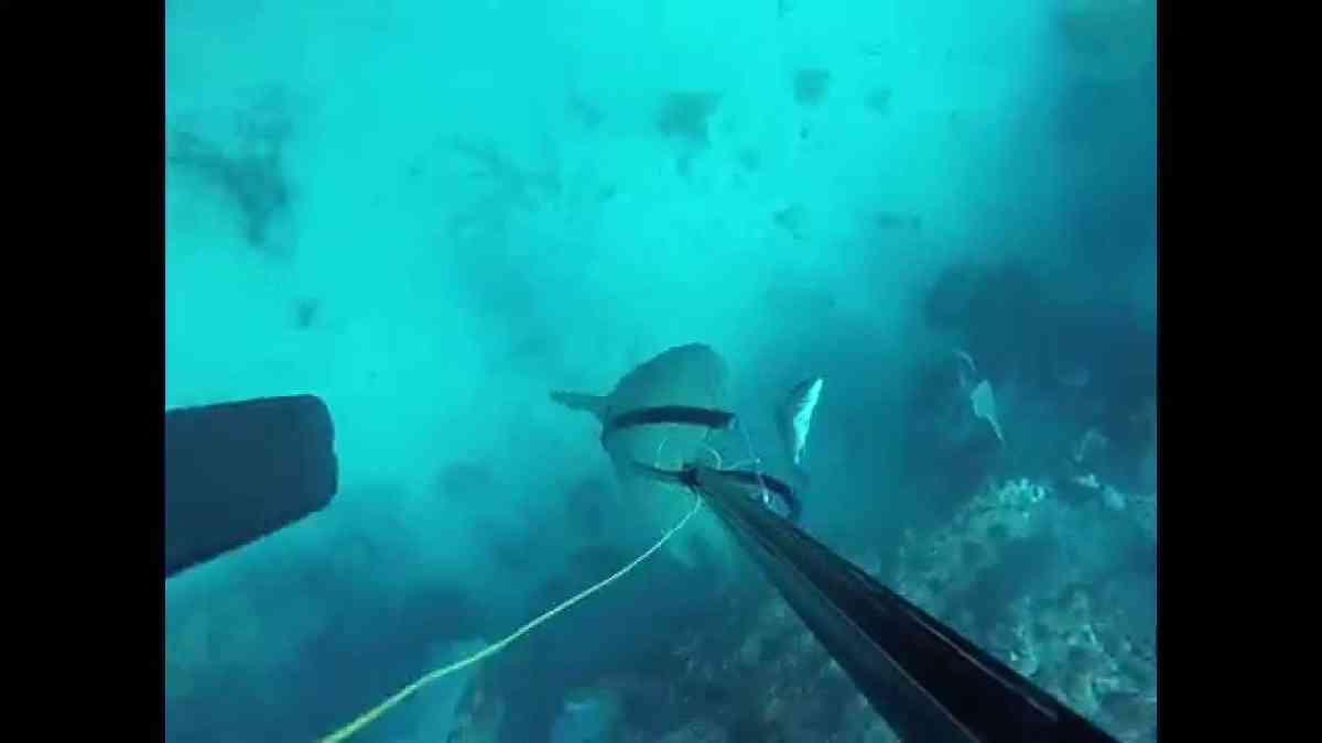 Team Poking Squid Spearfishing