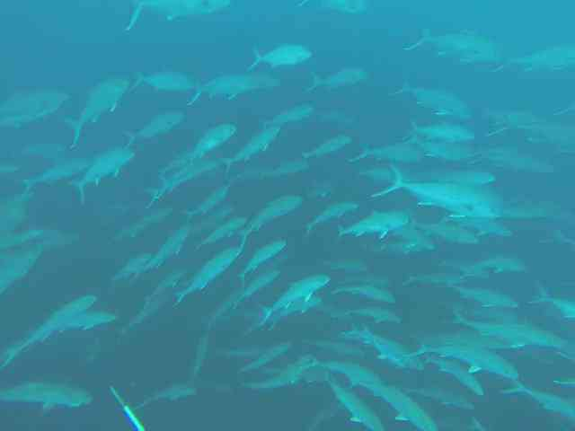 No shortage of Fish in GOM