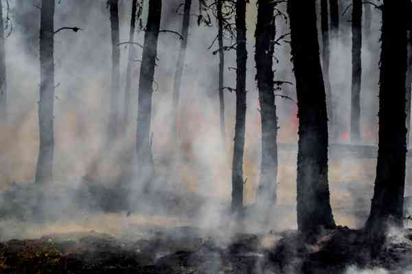 RESOURCE: Knowledge-into-Action briefs   Bushfire   Recovery