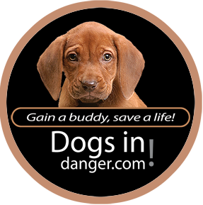 Dogs In Danger - Search Engine