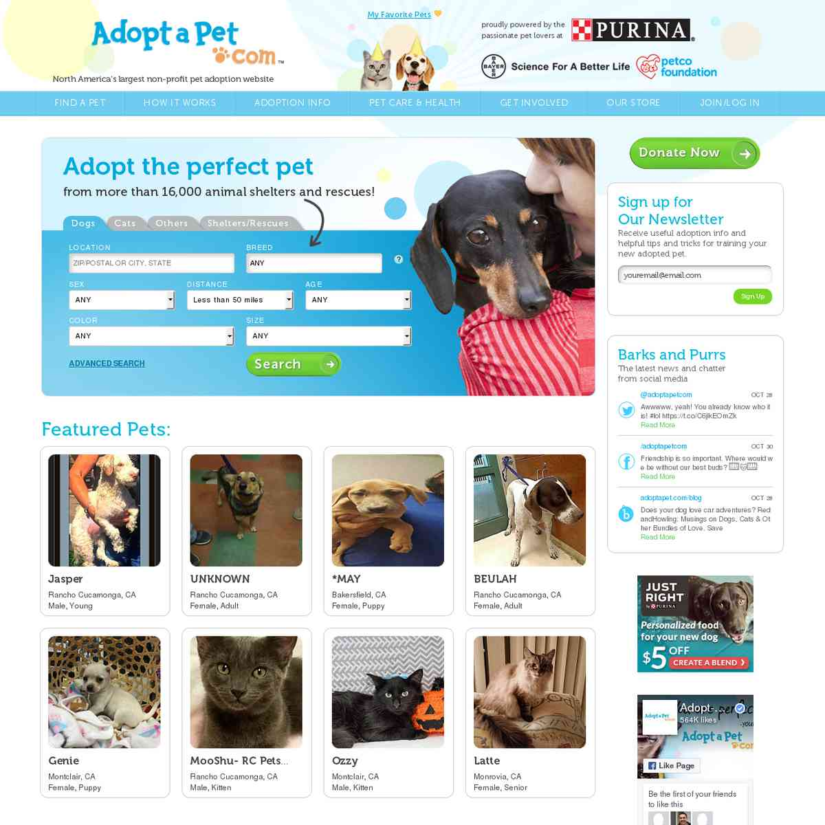 Adopt a Pet - Search Engine