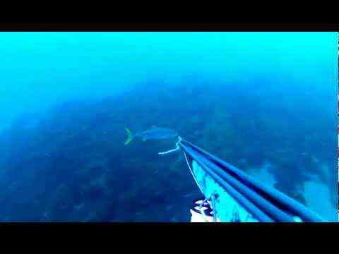 Spearfishing Yellowtail in So Cal (San Clemente Island)