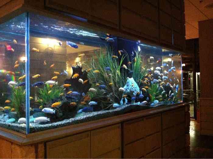 Một số lưu ý để đặt bể nuôi cá theo phong thủy để hút tài lộc