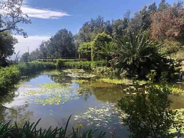 03. Ischia and the giardini la Mortella
