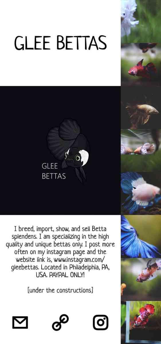 GLEE BETTAS
