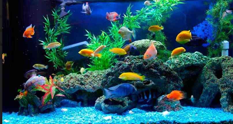 [Lưu ý cực kỳ quan trọng] khi nuôi nuôi cá cảnh và chơi bể cá theo phong thủy t…