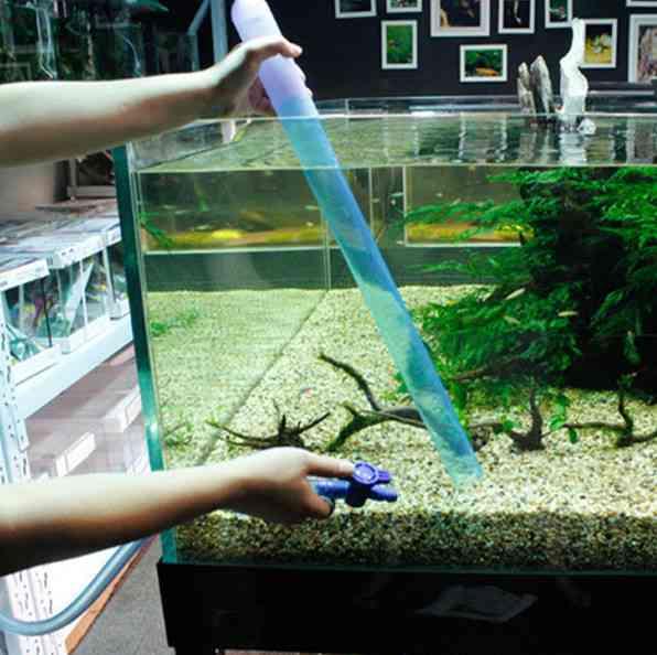 Hướng dẫn kỹ thuật nuôi cá cảnh trong bể cá để cá không chết