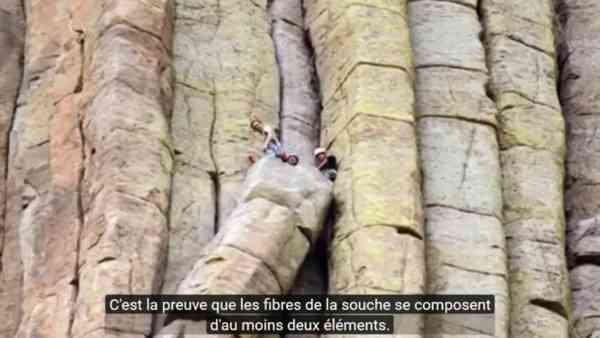 (17) Les Arbres Géants Fossilisés : Théorie et Compilations d'informations - YouTube