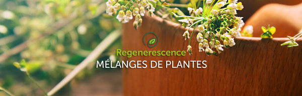 Mélanges de plantes Regenerescence