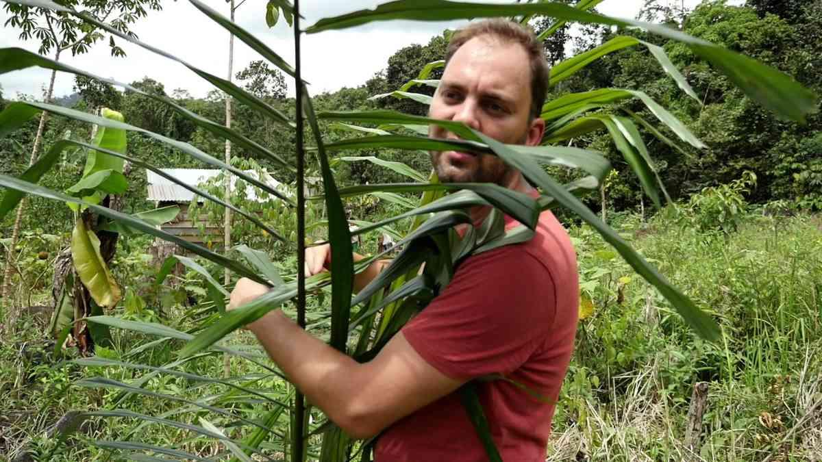 Pieter hugs a sugar palm in Indonesia EN