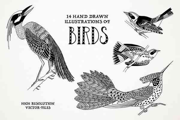 $ Hand Drawn Illustrations Of Birds
