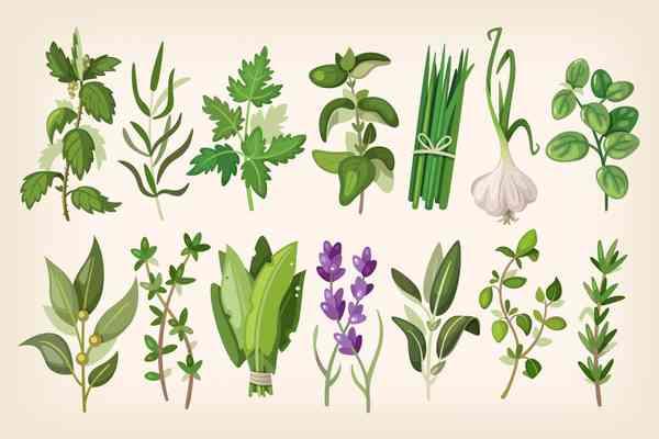$ Common Herbs