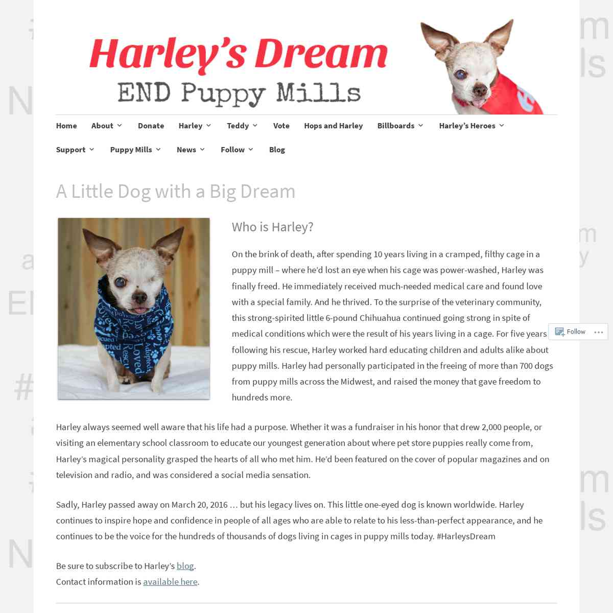 Harley's Dream