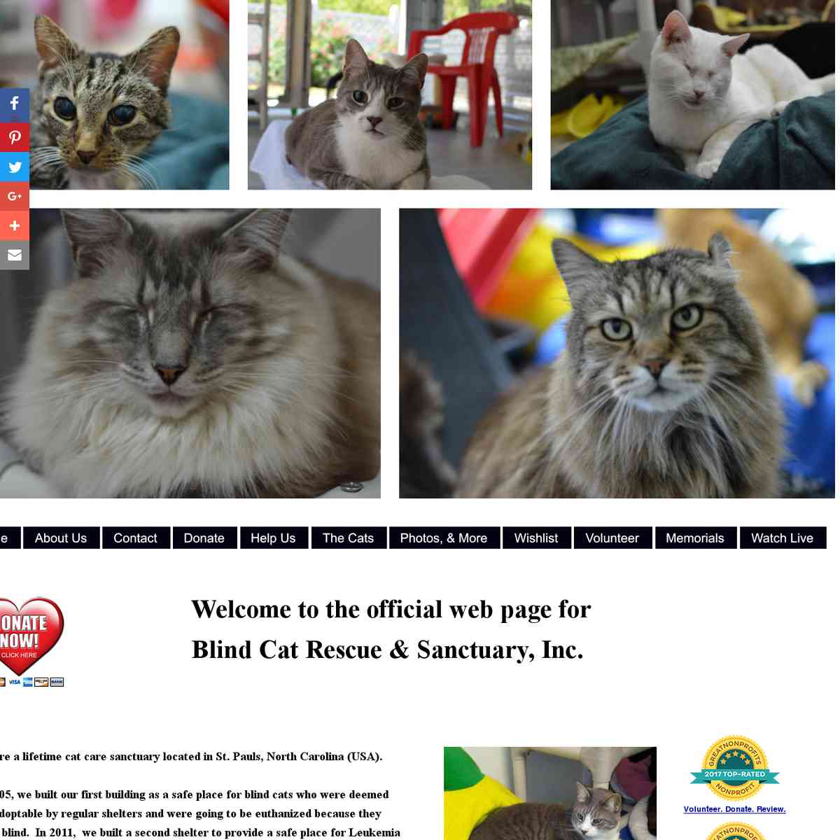 Blind Cat Rescue & Sanctuary (NC)