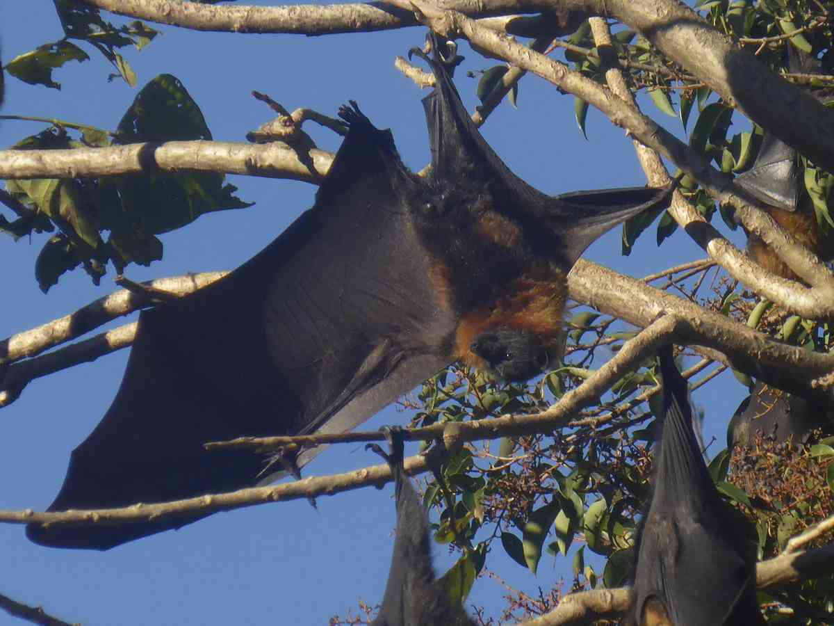04. Manly Dam and some flying foxes