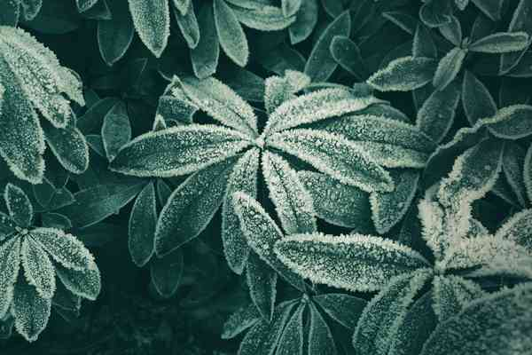 Green Pictures [HD] | Download Free Images on Unsplash