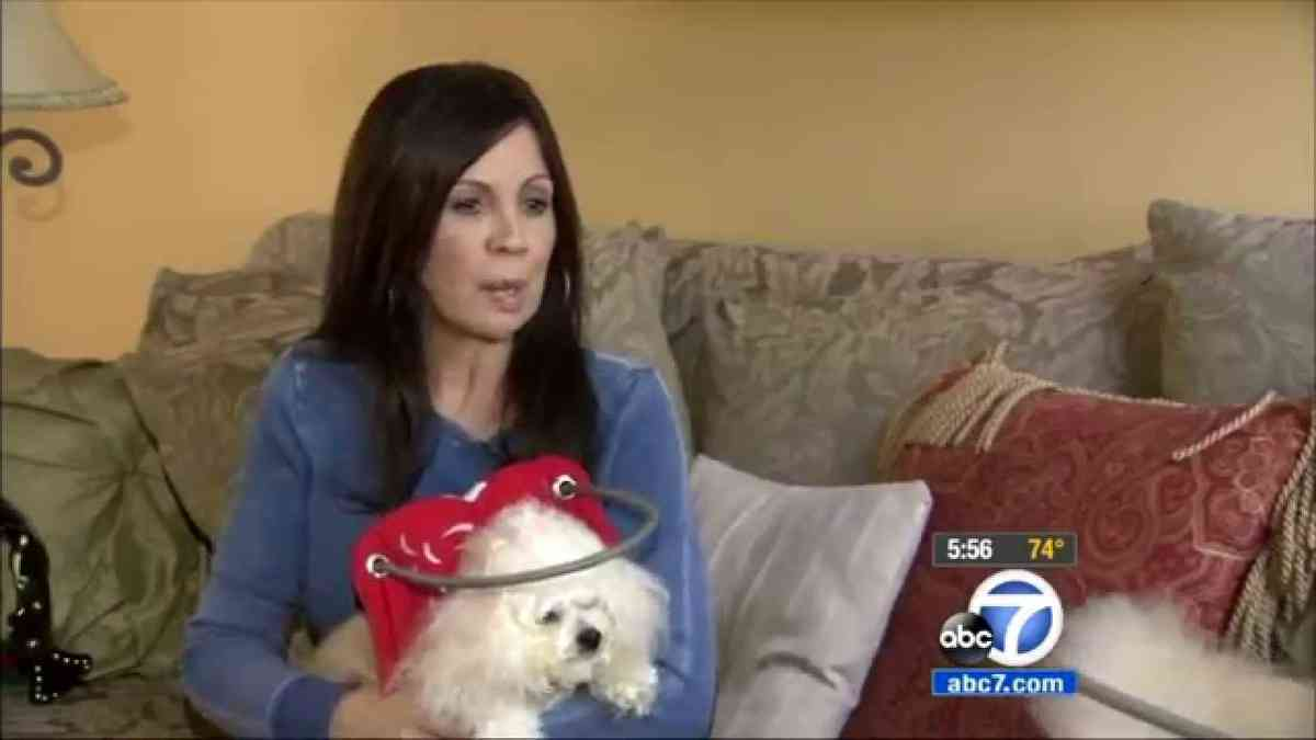 Muffin's Halo on ABC 7 News
