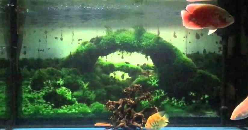 [Tìm hiểu] về mẫu bể cá camry - thú chơi bể cá cảnh chất lượng