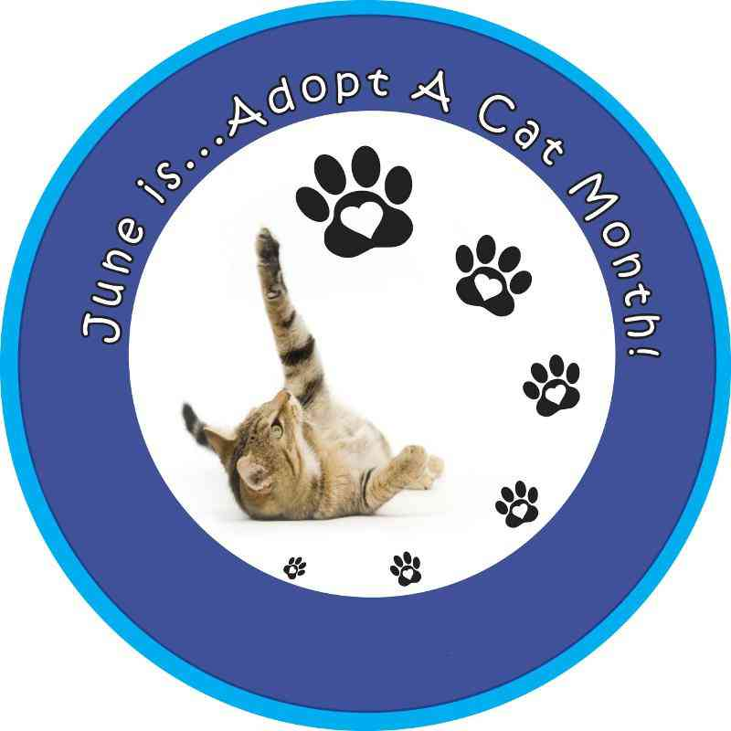 Adopt-A-Cat Month - June