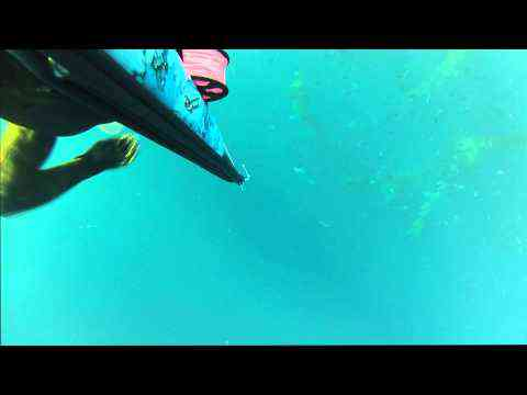 Spearfishing Catalina Island
