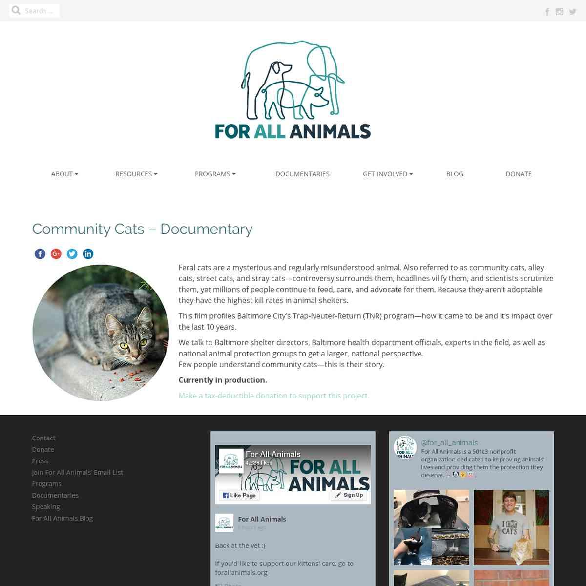 Community Cats Documentary