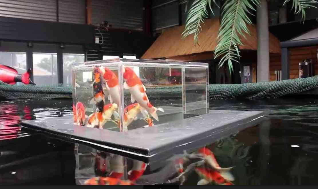 Hướng dẫn làm bể cá cảnh mini bằng nhựa – Công Ty Thi Công Và Thiết Kế T…
