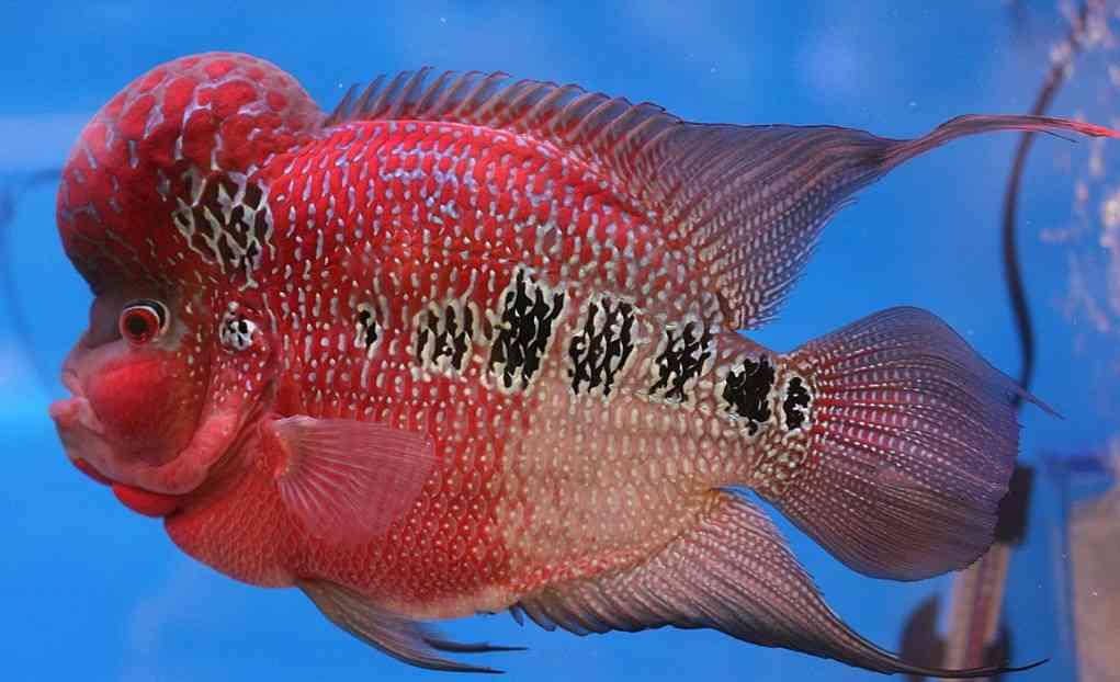[Khám Phá] các loại cá cảnh được nuôi phổ biến tại Việt Nam