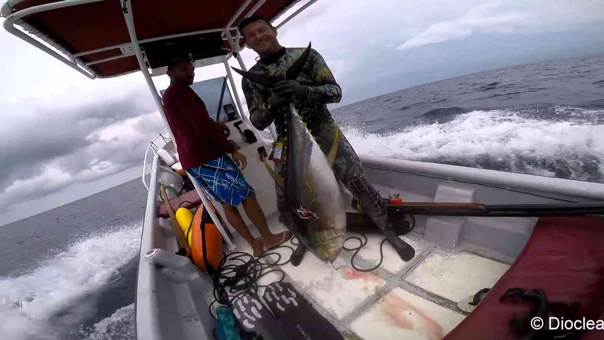 Action de chasse: Yellowfin Tunas, season 2015