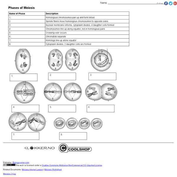 Biologycornerworksheetsmeiosis2mlu4zhbnyjrz Mitosis
