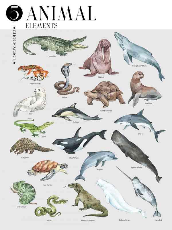 $ Animals