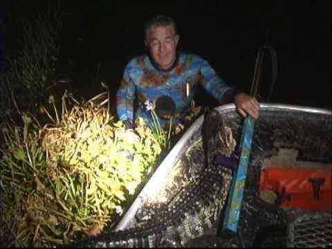 Real Sea Camo wetsuit goes gator speargun hunting in Lake Okeechobee