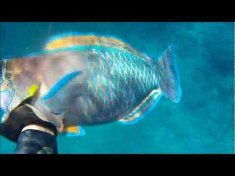 Spearfishing: An Underwater Addiction