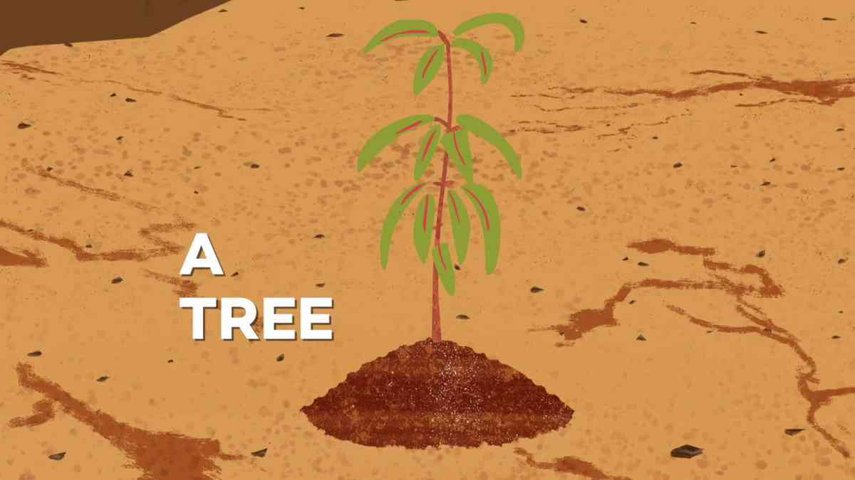 From seeds to trees