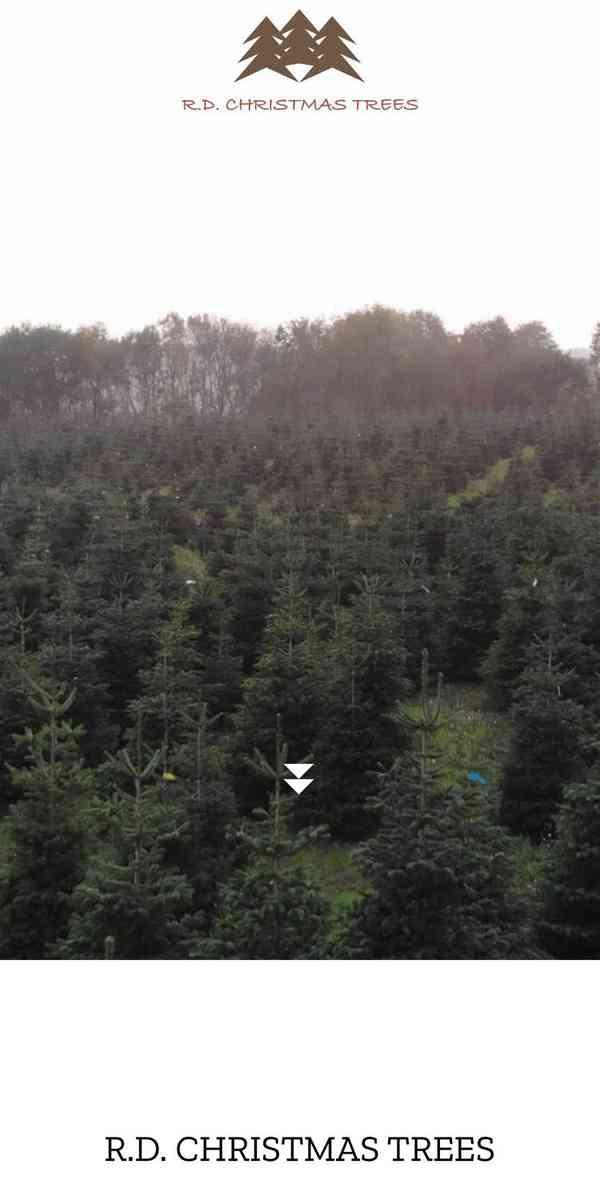 R.D. CHRISTMAS TREES