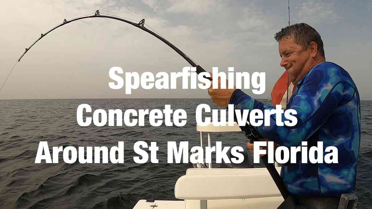 Spearfishing Concrete Culverts Around St Marks Florida