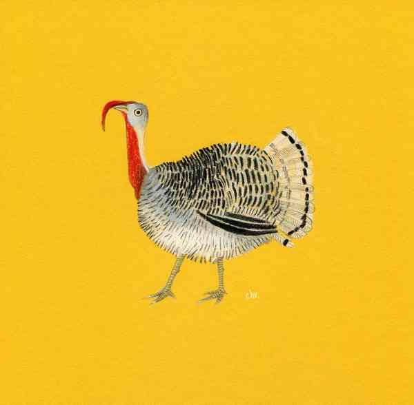 Illustration FARM | Turkey