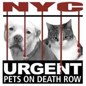 Urgent Death Row Pets of NYC