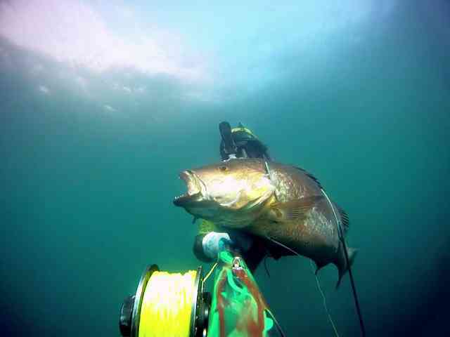 Spearfishing in LaPaz