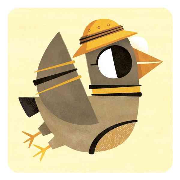 Animal Cards   Bird