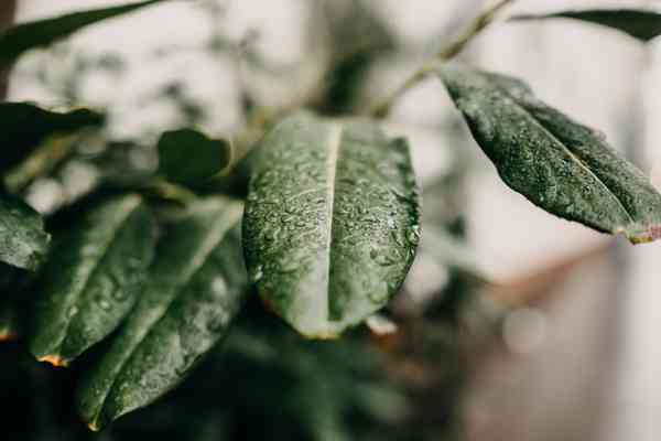 leafy | 66 best free leafy, leafe, plant, and leaf photos on Unsplash