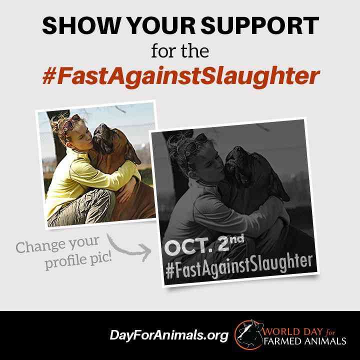 World Day for Farmed Animals - Oct 2