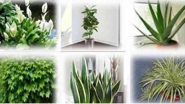 Estas son algunas de las plantas que deberías tener en tu casa para renovar el aire - Saludable.Gu…