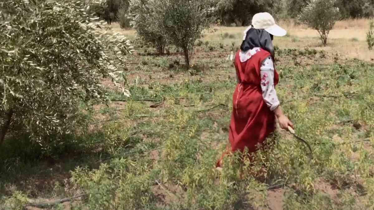 Malika's Tree Story