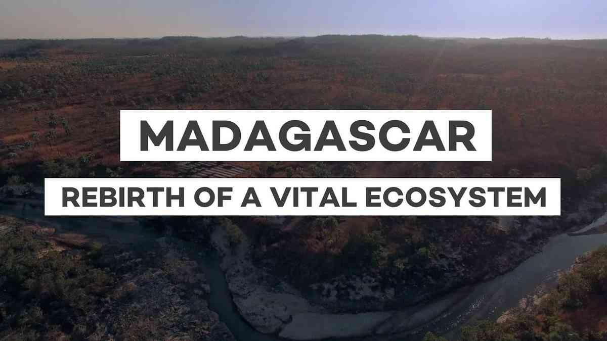 Madagascar - Rebirth of a vital ecosystem