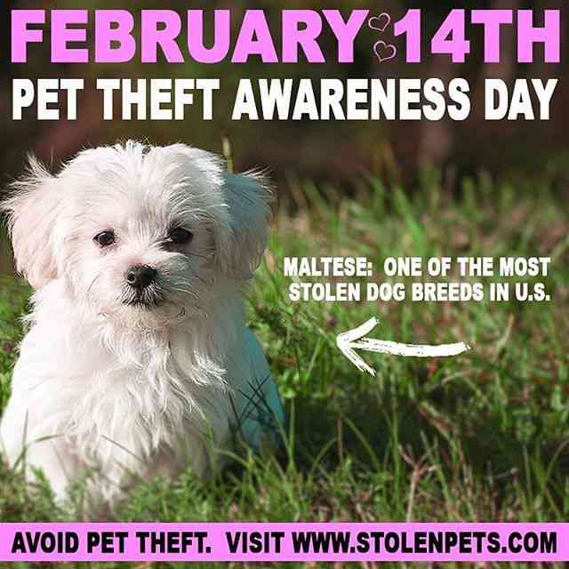 Pet Theft Awareness - February 14