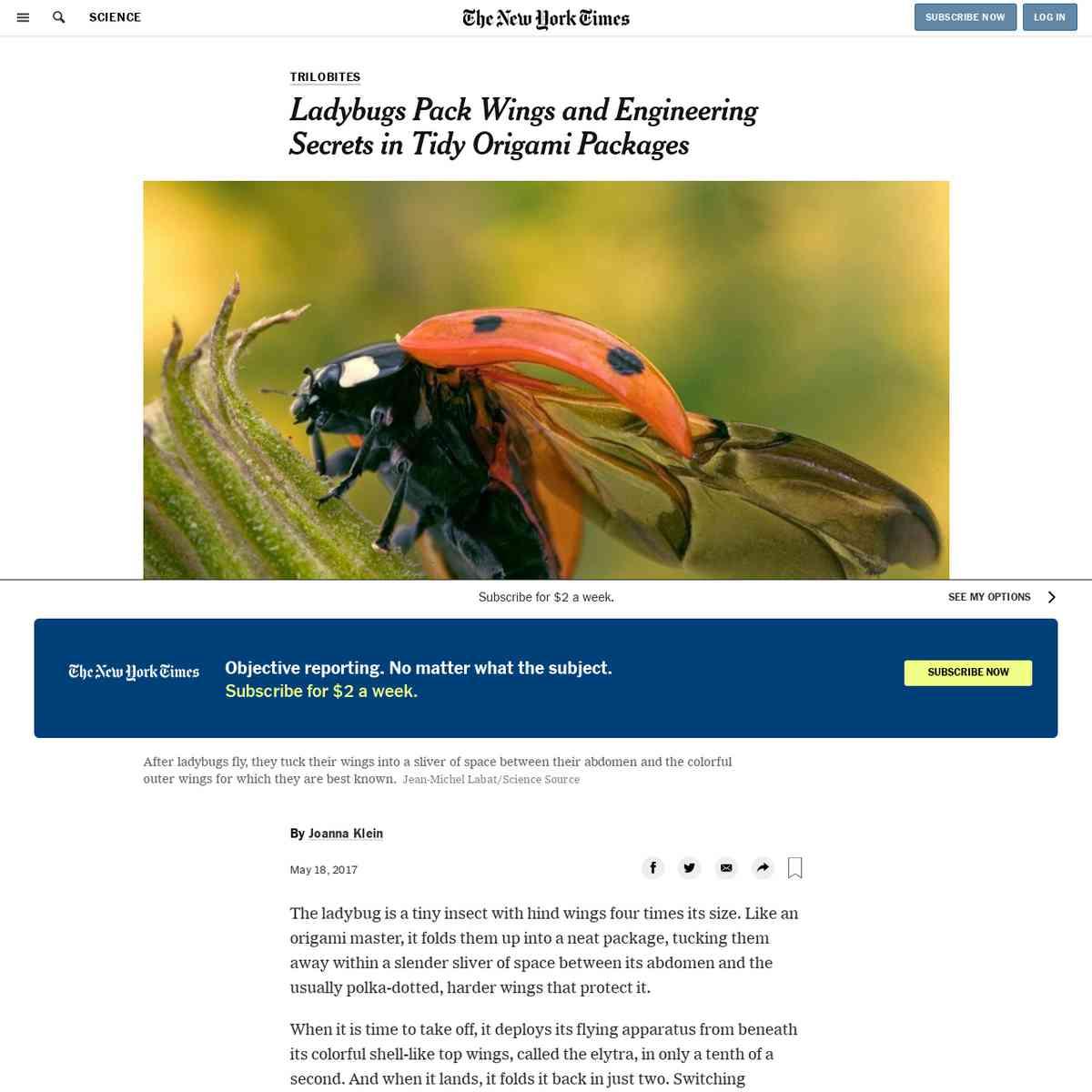 Ladybug Wings / Deployable structures