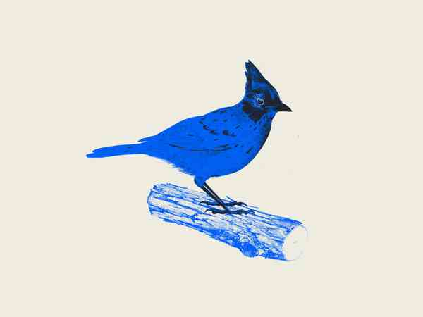 Blue Jay by Derric Wise on Dribbble