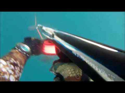 Spearfishing White Seabass
