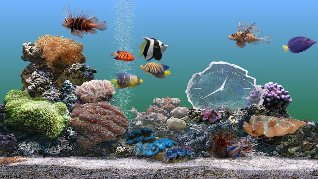 Một số loài cá bạn có thể nuôi chung cùng một bể cá cảnh